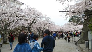 鶴ヶ城さくら祭り
