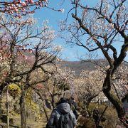 梅の花見の名所として有名です。