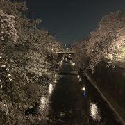 桜の時季は本当に見事