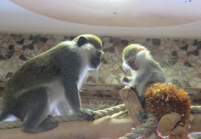 サハリン動物園