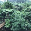 自然溢れるホテル