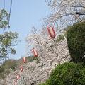 池田五月山さくらまつり