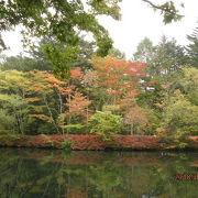 きれいな池