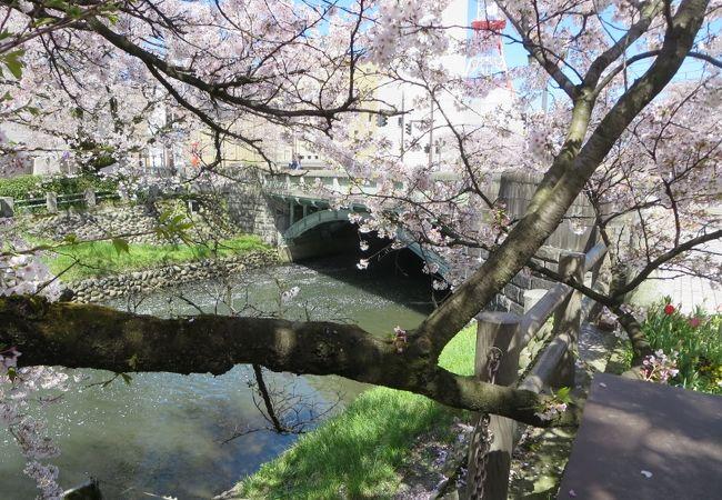 ちょうど桜が咲いていました
