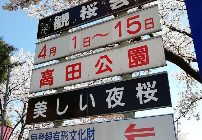 高田城百万人観桜会