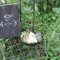 写真:森のスープ屋 シネマバレイ