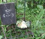 森のスープ屋 シネマバレイ