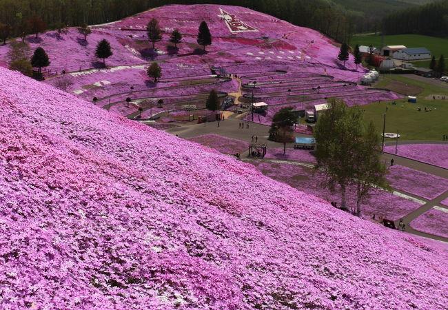 ひがしもこと芝桜公園キャンプ場