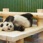 パンダもコアラもいます