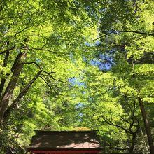貴船神社と青紅葉