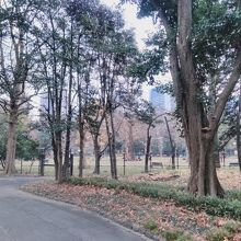 日比谷公園 健康運動広場