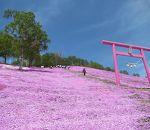 藻琴山温泉 芝桜公園