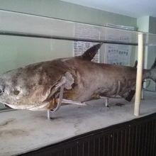 チェンコーンナマズ水族館