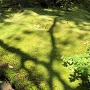苔が美しい