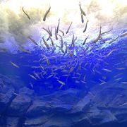 スタッフ愛にあふれたステキな水族館。
