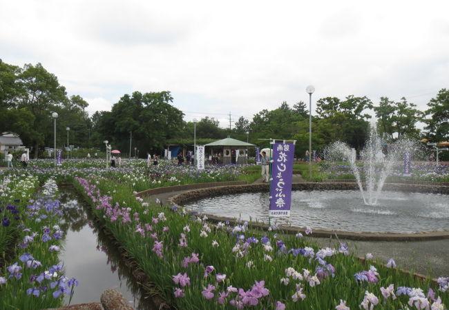 油ヶ淵花しょうぶ公園