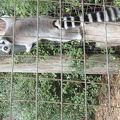 写真:ウィロウバンク動物公園