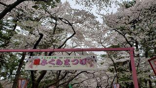 金木桜まつり