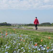 相模川河川敷の広々とした公園
