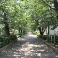 南町桜並木遊歩道