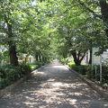 写真:南町桜並木遊歩道