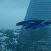 都会の水族館