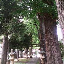荻窪駅近く、静かな雰囲気でお参りできる穴場の神社