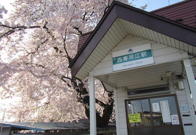 駅横の桜が見事