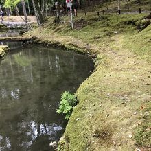 西芳寺 苔の庭