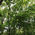 写真:新雑木林