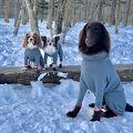 ドッグリゾートwoof 毎年恒例の雪遊び