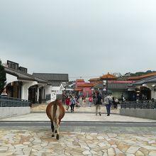 馬が街を歩いている