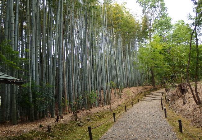 地蔵院の竹林