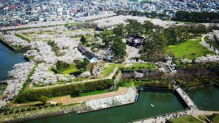 満開の桜を一望できる