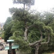 """""""名所江戸百景""""に書かれた《上野清水堂不忍ノ池》と《上野山内月のまつ》の『月の松』です。"""