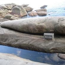 クジラの昼寝です