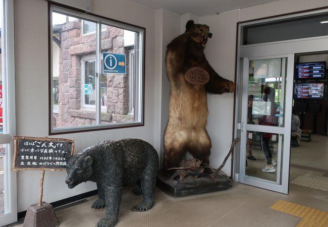 クマがお出迎え?!