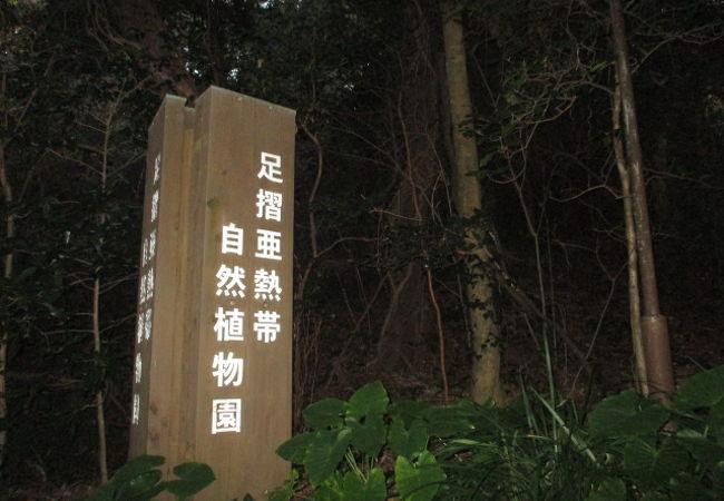 亜熱帯植物園