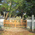 写真:少弐資時の墓
