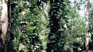 ジャングル探検気分