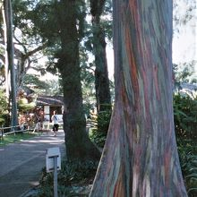 園内の珍しい木