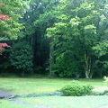 お庭の美しい自然に癒されました