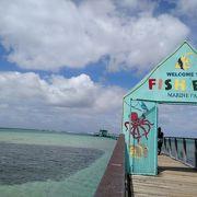 長い桟橋からの絶景と海中観察