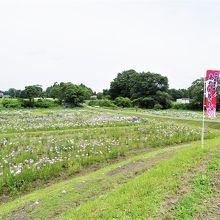 胆沢城跡歴史公園