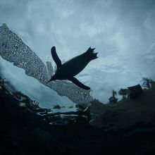 これが、そら飛ぶ「ペンギン」!!