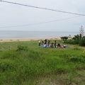 伊勢湾を一望できる白砂青松、俳人山口誓子も愛した鼓ケ浦の海
