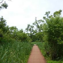 ヨシ原の湿地帯