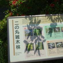 東京ど真ん中の雑木林