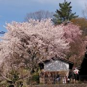 春の花咲く馬籠宿