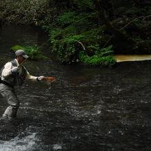 ちょうど渓流釣りの人が釣り上げていました。